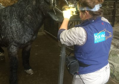 Vet performing dentistry on pony